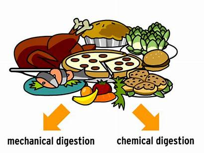 Digestion Digestive System Clipart Brainpop Clip Cliparts