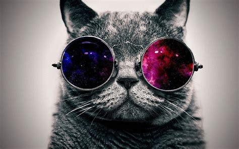 Wallpaper Of Cool by Cool Cat Hd Wallpaper 66 Images
