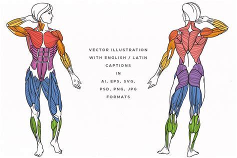 Последние твиты от torso muscles (@torsomuscles). Muscles Of The Human Body , #AD, #editable#vector# ...