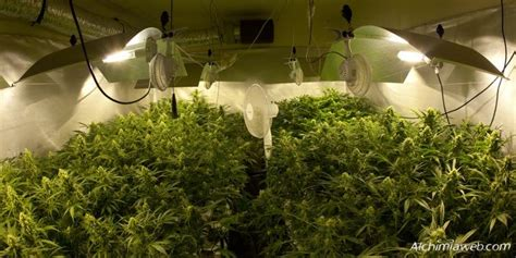 chambre de culture cannabis interieur ventilation for marijuana grow rooms alchimia