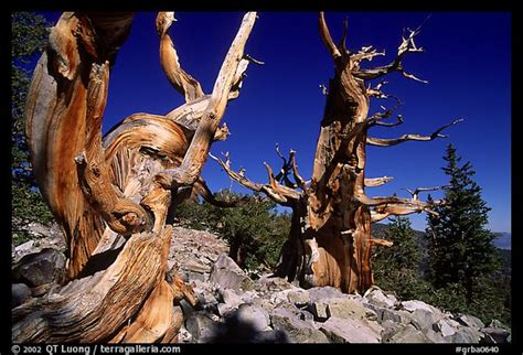 great basin national park mowryjournalcom