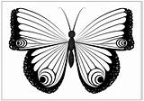 Butterfly Coloring Pages Drawing Printable Fun Monarch Cocoon Caterpillar Single Print Drawings Getdrawings Any Paintingvalley Resell Reproduce Provided Personal Form sketch template