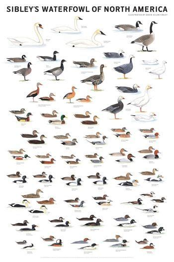 Duck Identification Chart   Waterfowl Of North America. Alterra Assisted Living Facility. Employee Tracking Template Byu Online Degree. Jobs You Can Do With A Criminal Justice Degree. How To Submit An Invention Paper Towel Brand. Grand Junction Auto Salvage At&t High Speed. Online Backup Free Trial Obama Life Insurance. Company Liability Insurance Navy Seal Fakes. Inpatient Drug Treatment New Ford Fusion Cost