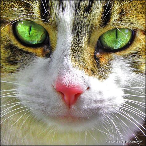 Funny And Cute Cats Gallery