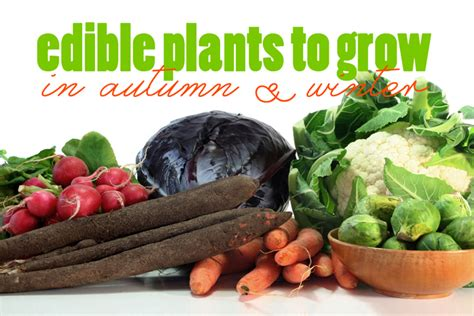 edible plants    grow  autumn  winter