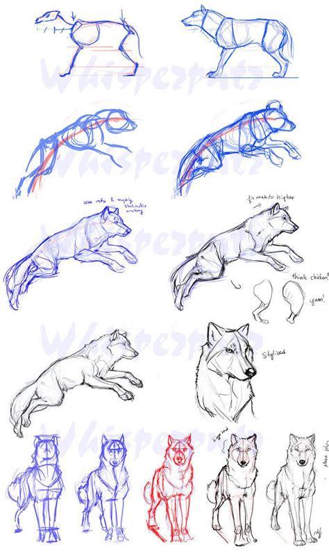 ideas    draw wolf  pinterest