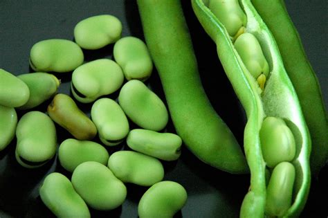 fava beans olives bread fava beans with artichoke hearts