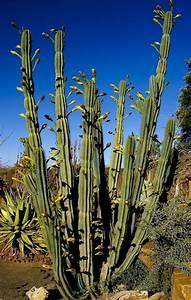 Sukkulenten Arten Bilder : namibia namib naukluft park bl ten des s ulenkaktus ~ Lizthompson.info Haus und Dekorationen