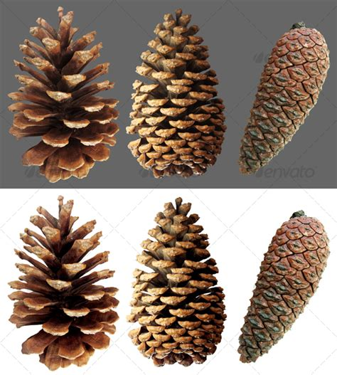 The Chew Templates Pine Cones Animals by Closed Pine Cone 3 By Yio Graphicriver