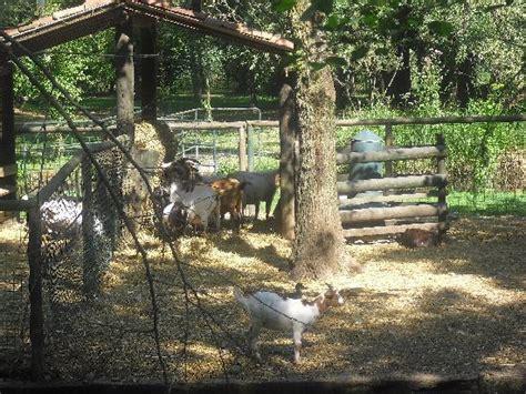 Animali Da Cortile Elenco by Animali Da Cortile Foto Di Parco Ittico Paradiso Zelo