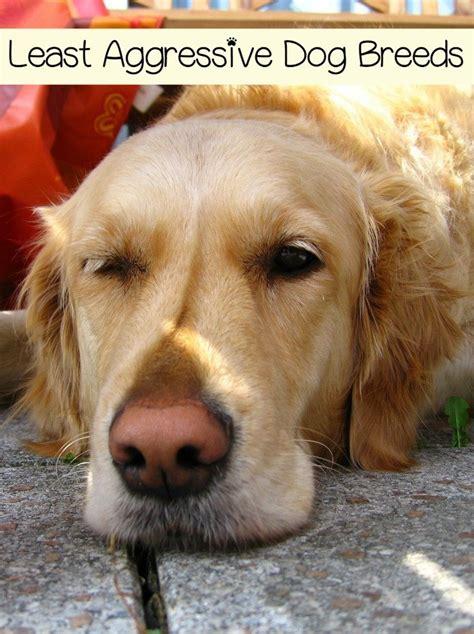 aggressive dog breeds dogvills