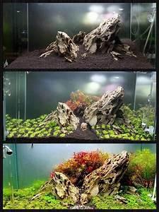Idee Decoration Aquarium : decorazione originale acquario 17 idee fantastiche ~ Melissatoandfro.com Idées de Décoration