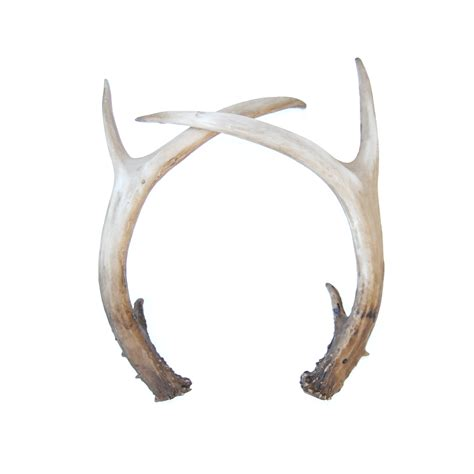rustic farm faux table top antler decor pair looking