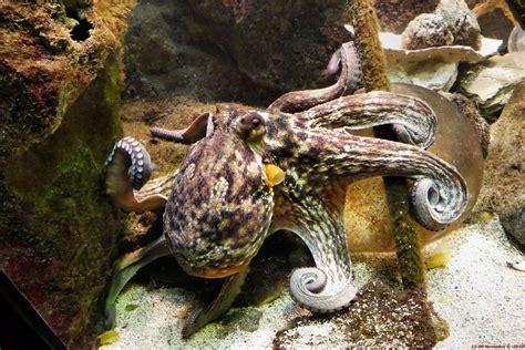 cuisine allmilmo prix grand aquarium bretagne 28 images aquarium malo grand