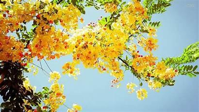 Aesthetic Yellow Flowers Wallpapers Desktop Flower Laptop