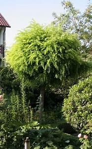 Kleine Bäume Für Vorgarten : die besten 25 der baum ideen auf pinterest sch ne b ume ~ Michelbontemps.com Haus und Dekorationen