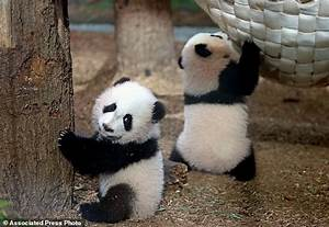 Atlanta Zoo to return giant panda twins next months ...