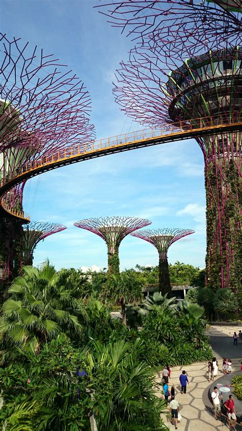 gardens by the bay gardens by the bay trees grove skyway