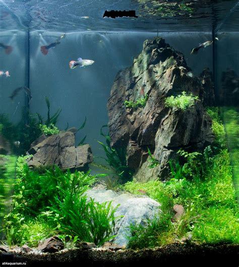 Fish For Aquascape - a glimpse of the of pictus catfish aquariums fish