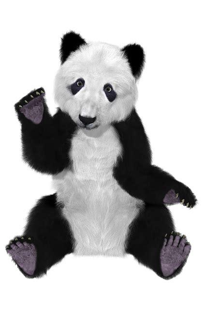 panda chine  image gratuite sur pixabay