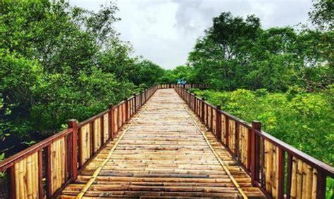 wali kota liverpool berburu foto wisata mangrove