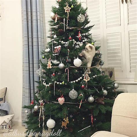 christmas cats of instagram celebrate social media s