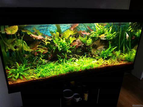 welches glas für aquarium 300l aquarium flowgrow aquascape aquarien datenbank