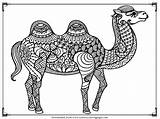 Camel Coloring Pages Printable Adult Realistic Camels Adults Ksi Downloads Want Previous sketch template