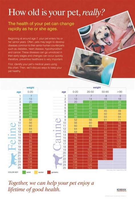 cat years chart 1000 images about dogs on pinterest virginia cats and humane society