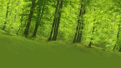 Background Tree Animation Forest Plates Backdrop Fallen