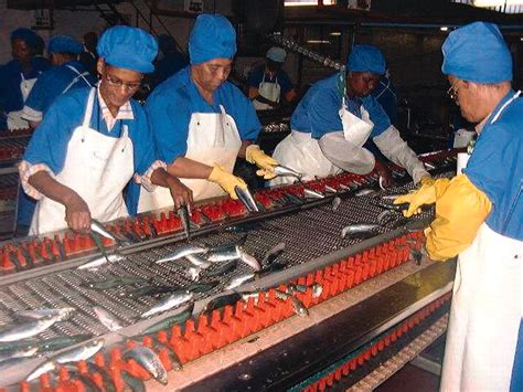 world  work fish processing workers occupational