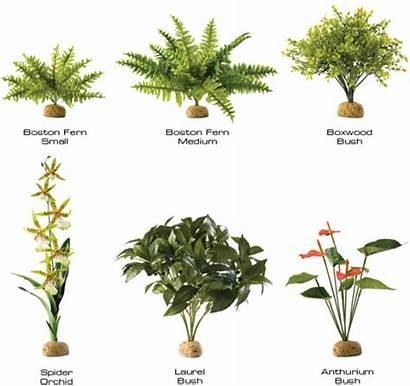 Rainforest Plants Tropical Rainforests Found Ground Animals