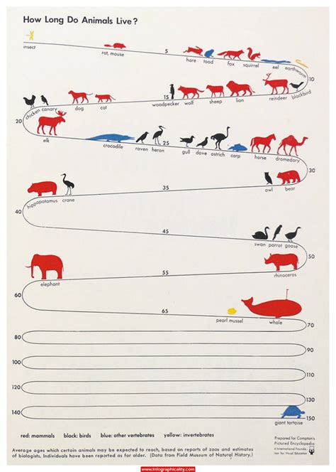 dur 233 e de vie combien de temps vivent les animaux