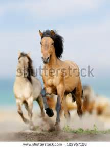 Wild Horses Running Stock Images, Royalty-Free Images