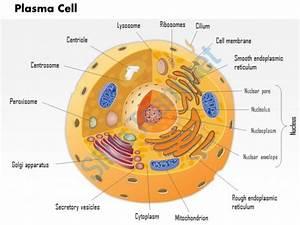Edexcel A2 Biology Snab 6bi04