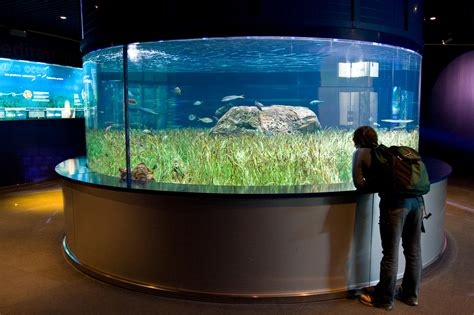 top 10 largest and most astonishing aquariums in the world toptenz net