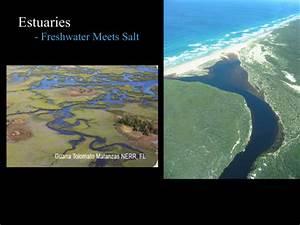 Fifth Grade Wiki - Estuary Biome