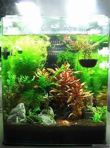 Co2 Rechner Aquarium : coconut hideout 30 liter cube flowgrow aquascape aquarium database ~ A.2002-acura-tl-radio.info Haus und Dekorationen
