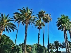 palm trees   Brohammas