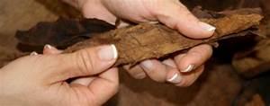 Tabak Selber Anbauen : zigarren selber drehen so rollst du sie richtig ~ Frokenaadalensverden.com Haus und Dekorationen