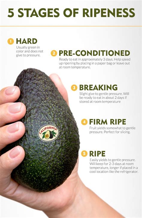 how to ripen avocados 83 best images about california avocados 101 on pinterest freeze avocado avocado dressing and