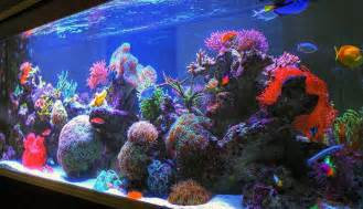 large fish tank decorations uniquely simple fish tank décor ideas design inspired