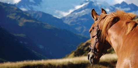 horse riding high country horses  zealand