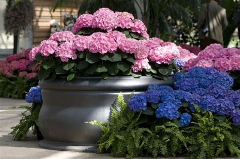 hydrangea garden design landscaping with hydrangeas 15 garden design ideas