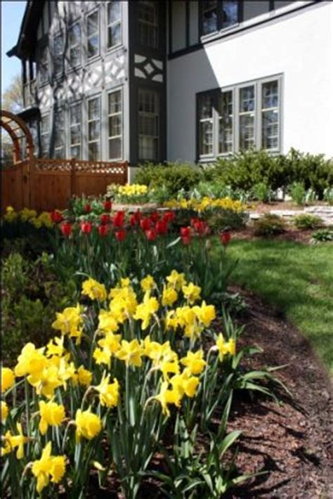 1000 images about bulbs on landscaping