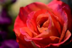 Floral Arrangements Weddings Picture