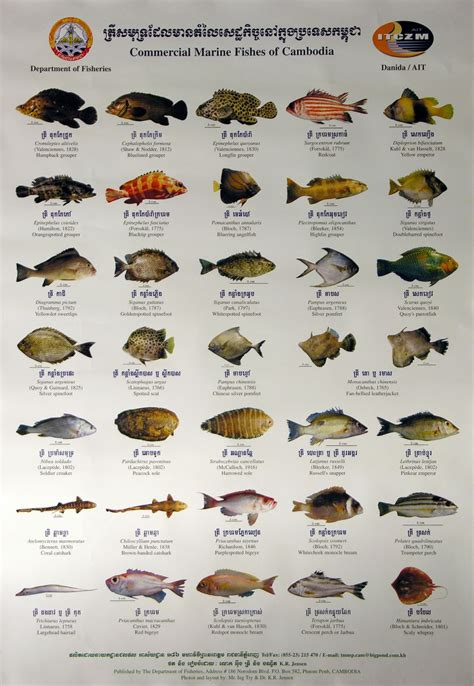 marine fish examples  marine animals