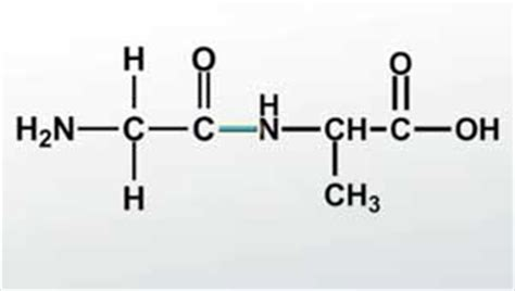 dipeptide definition formation structure video