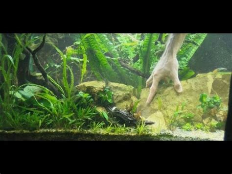 design  aquarium working   aquarium plants youtube