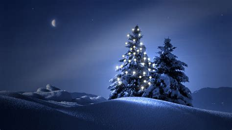 Clearly Christmas Tree At Night Wallpapers Hd / Desktop